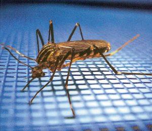 plase-de-tantari-plase-contra-insectelor-plase-antiinsecte